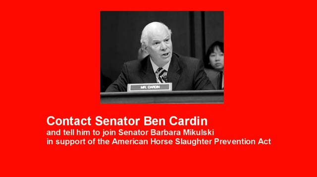 """Sen. Ben Cardin is """"undecided"""" on the issue of horse slaughter"""