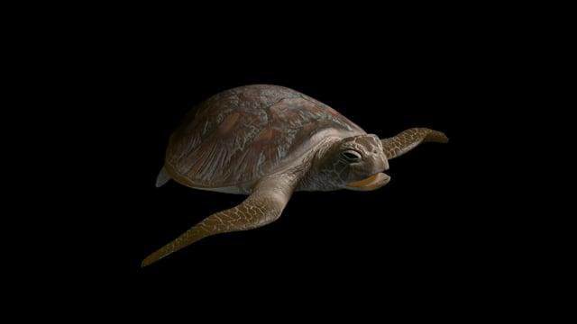 Sea Turtle Rigging | TVC