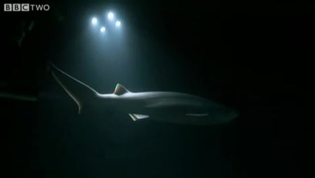 Six Gill Shark