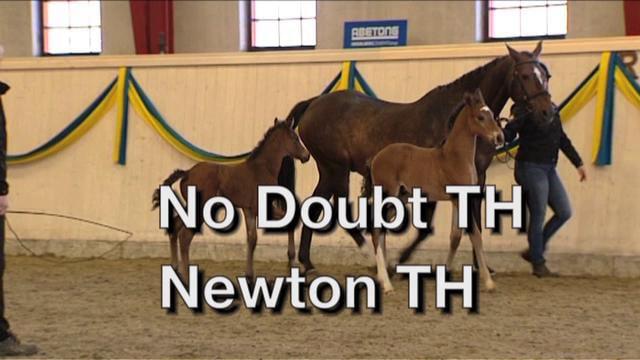 No Doubt TH + Newton TH