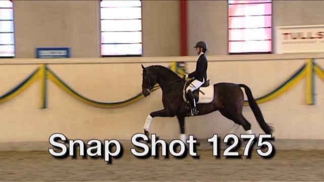 Snap Shot  1275