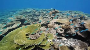 BasementVision 2013 show reel 2/3 - underwater Maldives