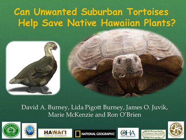 "2013_06. Dr. David Burney ""Can Unwanted Suburban Tortoises Help Save Native Hawaiian Plants?"""