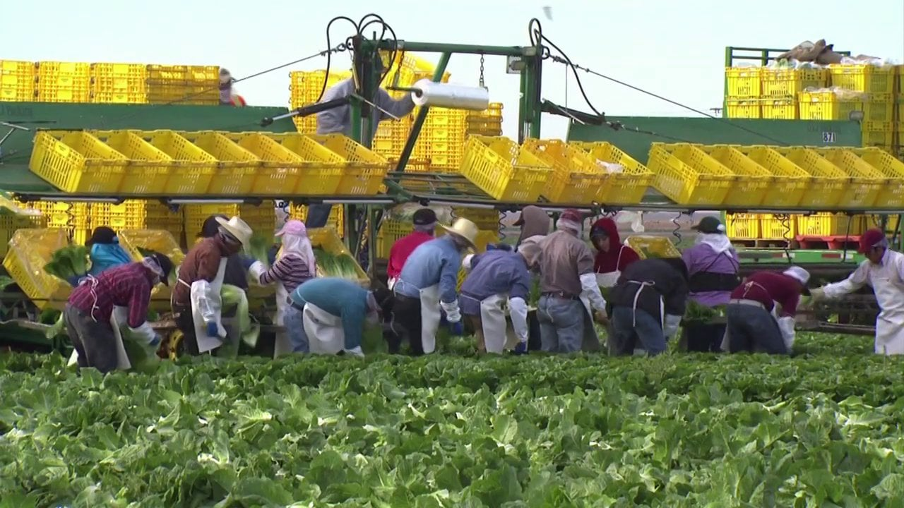 GreenGate Fresh - American Farmer (Feeding a Nation)