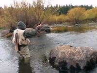 Maron en el rio Quillen (las champas