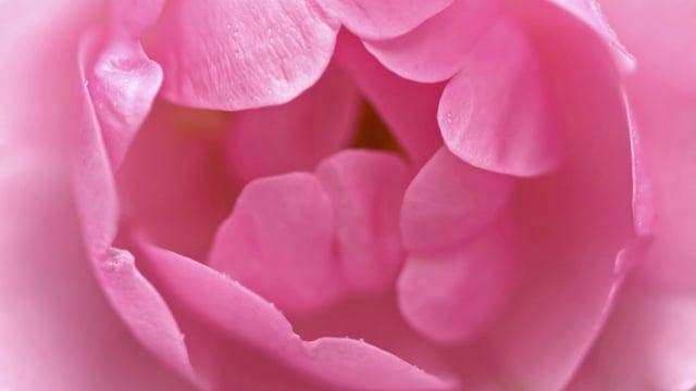 Bloom, excerpt