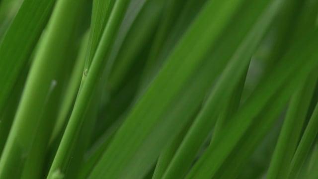 Green, excerpt