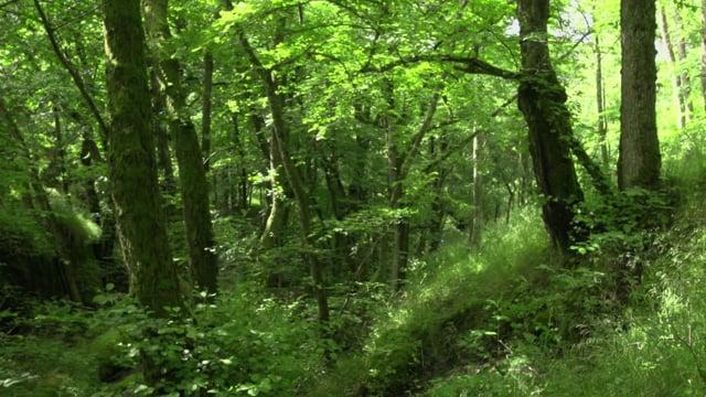 Deciduous forest, excerpt