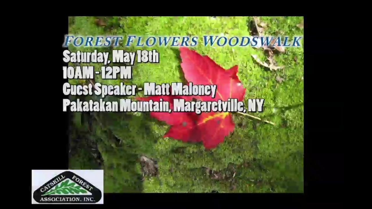 Forest Flowers Woodswalk - Pakatakan Mountain