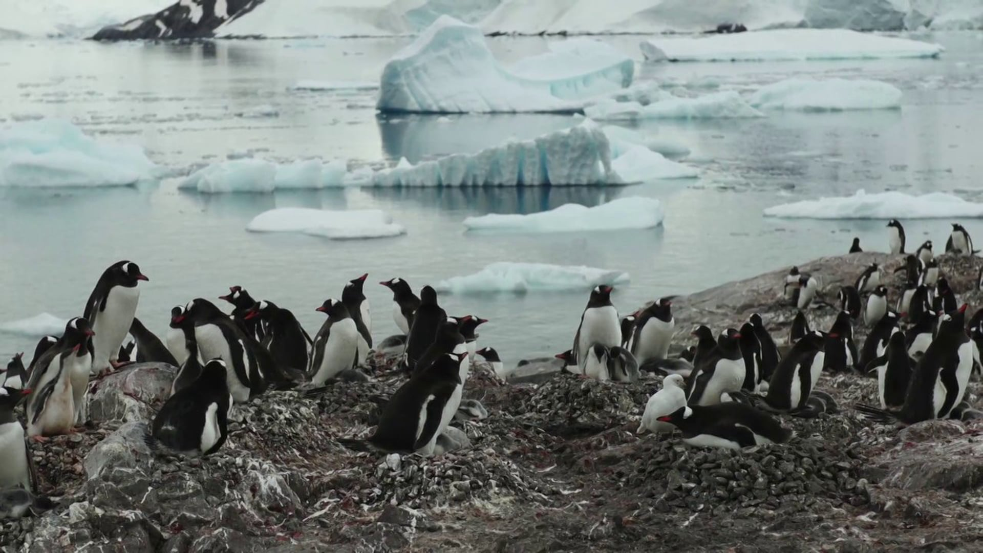 Antartica Joven