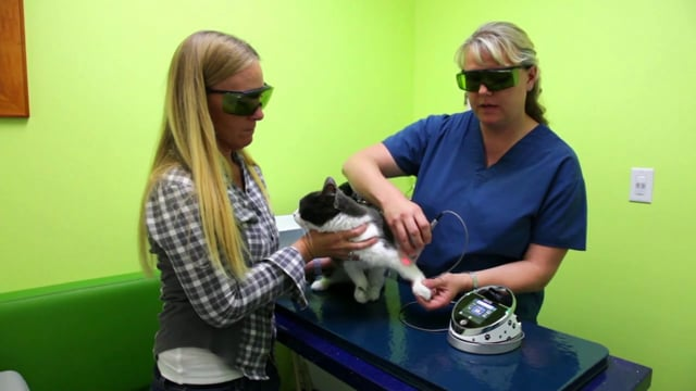 5400446 Rev A Video Training Epic V Pain Therapy Feline