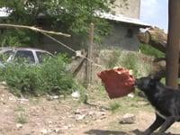 Paulo Nazareth, <em>Carne y Perros,</em> 2010, video, 1'45