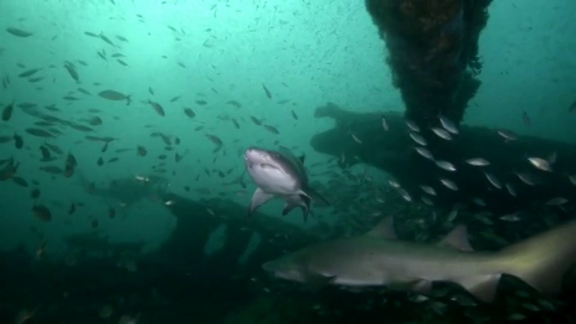 Wreck Diving with Sharks in North Carolina Part 2