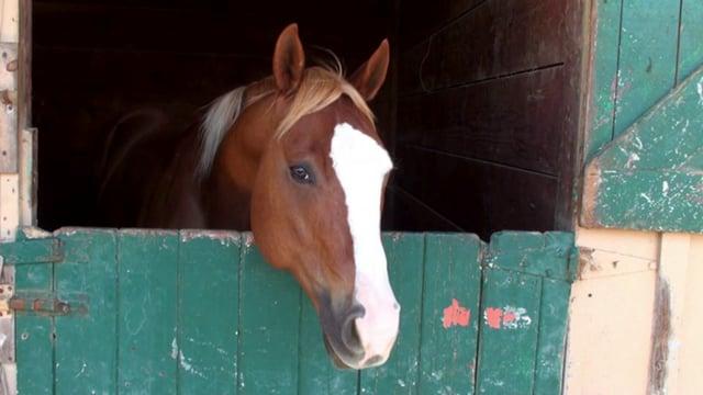 Horse in a Horse Barn