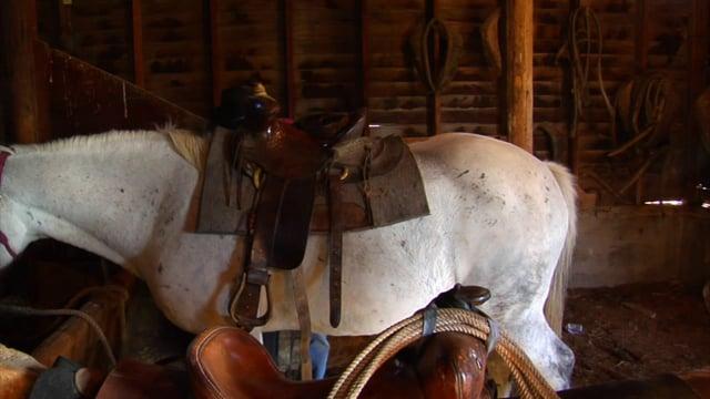 Western Saddle on a White Horse