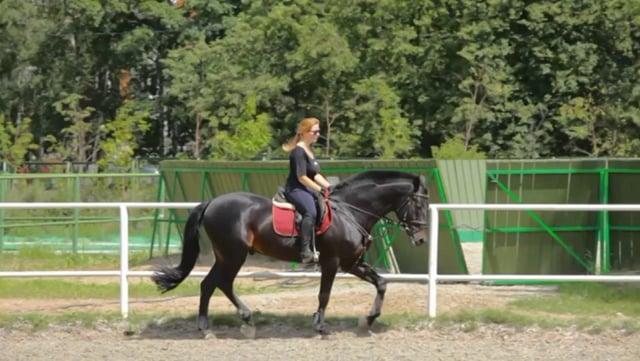 English Saddle on a Black Horse