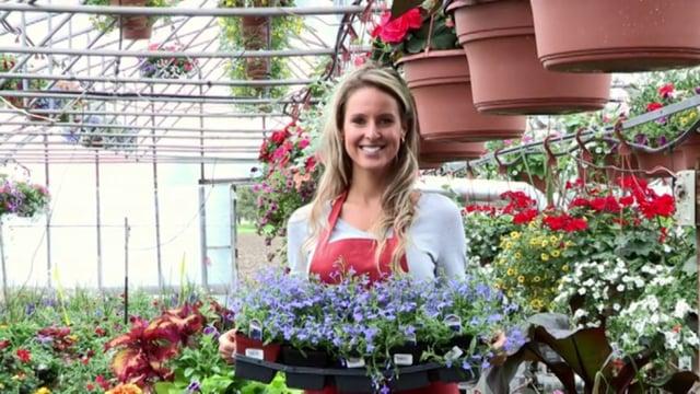 Plant Nursery Greenhouse