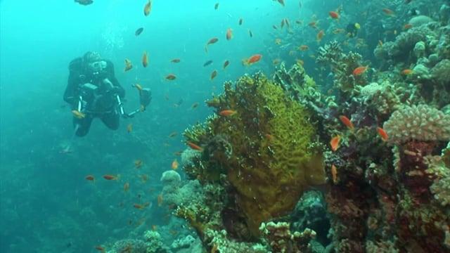 Scuba Diving in Tropical Waters