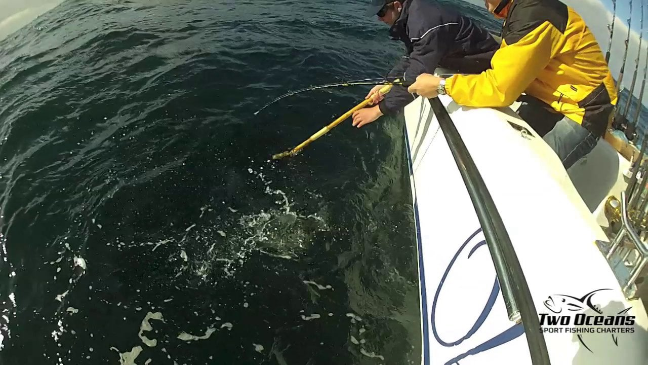 Yellowtail onboard Obsession