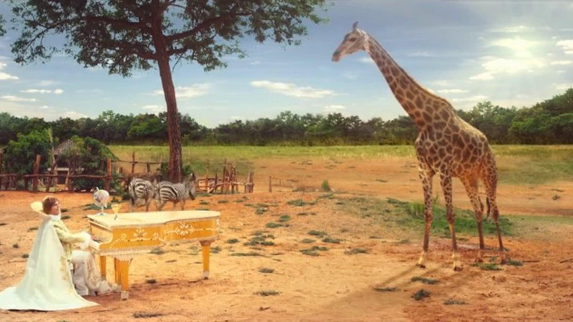 "BIG COLA - Win a Giraffe 20"""