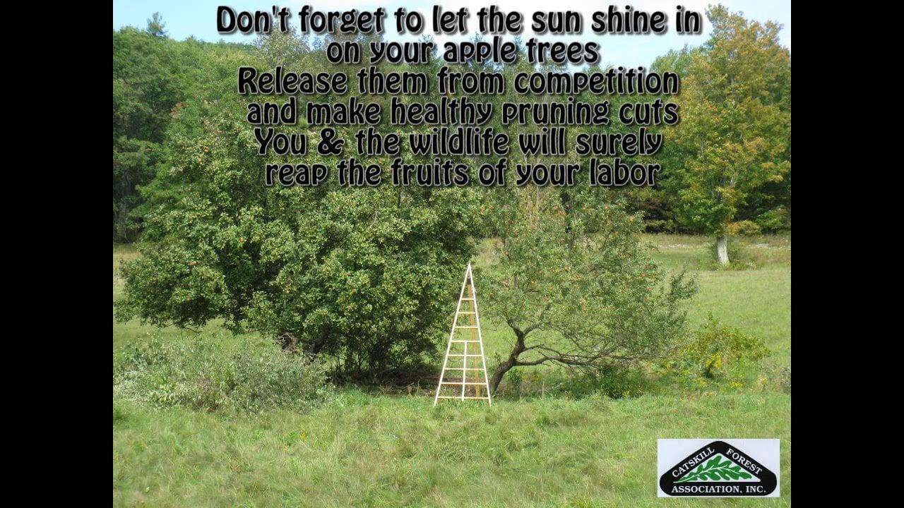 2013 Apple Tree Care & Cider-Making