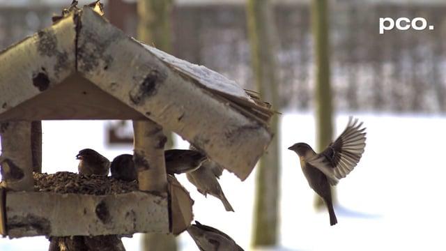 Birds Winter Feed House in Slow Motion