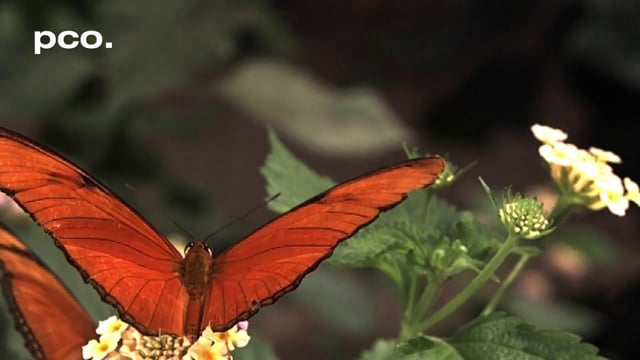 Butterflies, Bees & Wasps in slow motion
