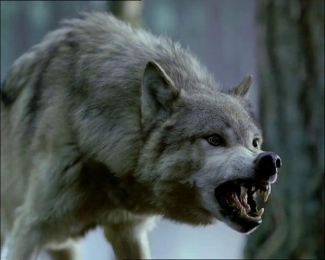 """Tatra """"Wolf"""""""