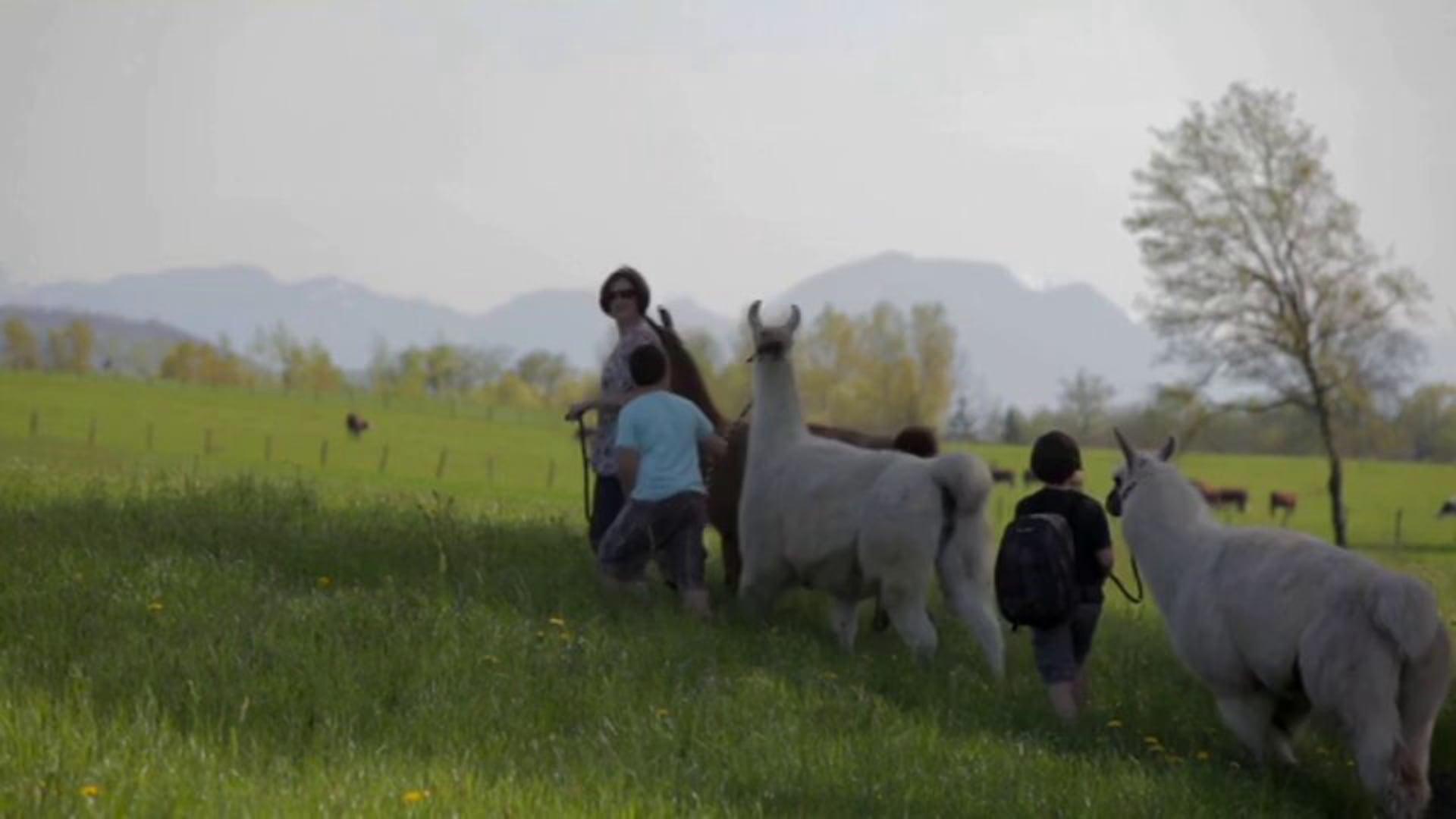 Haute-Savoie – Les etangs de Crosagny et les lamas de Salagine – Nathalie