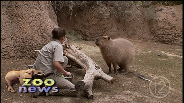 World's Largest Rodent