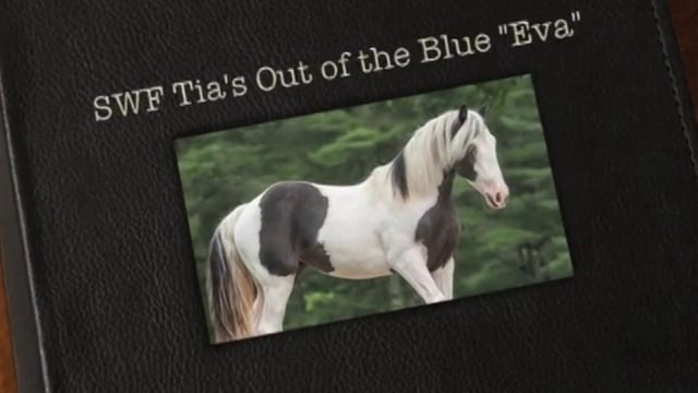 """SWF Tia's Out of the Blue """"Eva"""""""