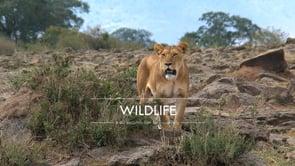 TravelTelly 60 seconds series - Wildlife