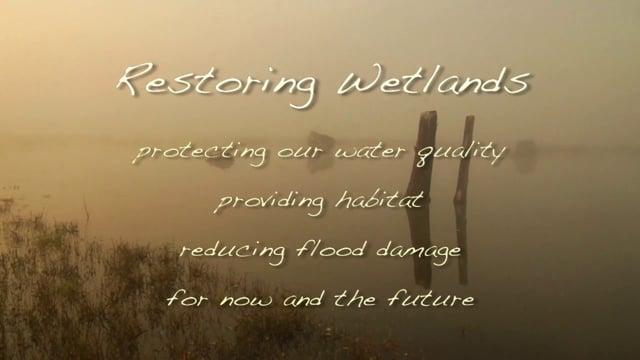 Environmental Documentary - EMMY Award Winner - WETLANDS RESTORATION - Excerpt