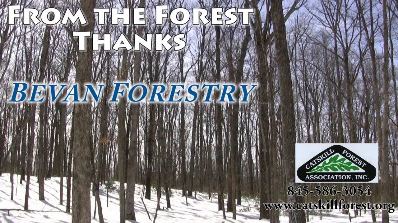 Bevan Forestry - Mechanical Harvesting in the Catskills
