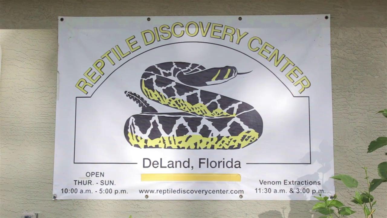 Misconceptions about venomous reptiles