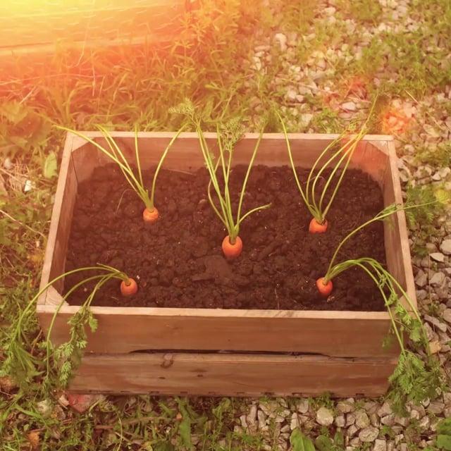 NATIONAL TRUST #50THINGS - PLANT IT, GROW IT, EAT IT