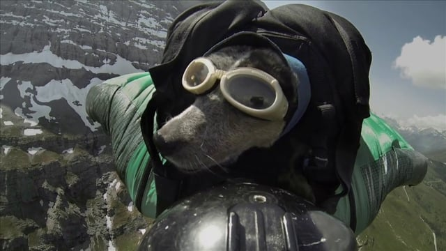 When Dogs Fly World's First Wingsuit BASE Jumping Dog from Dean S Potter