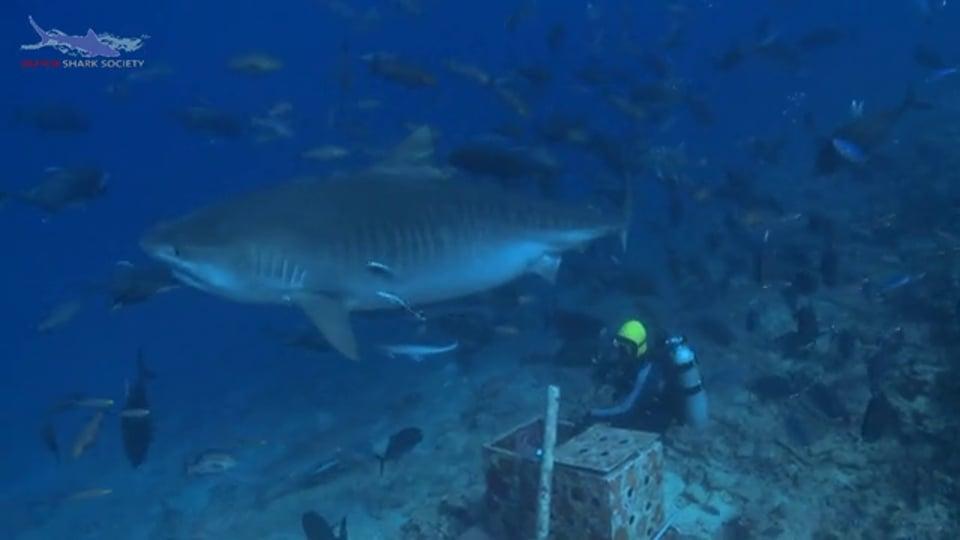 Fiji Shark Corridor and Shark Research (Dutch spoken)