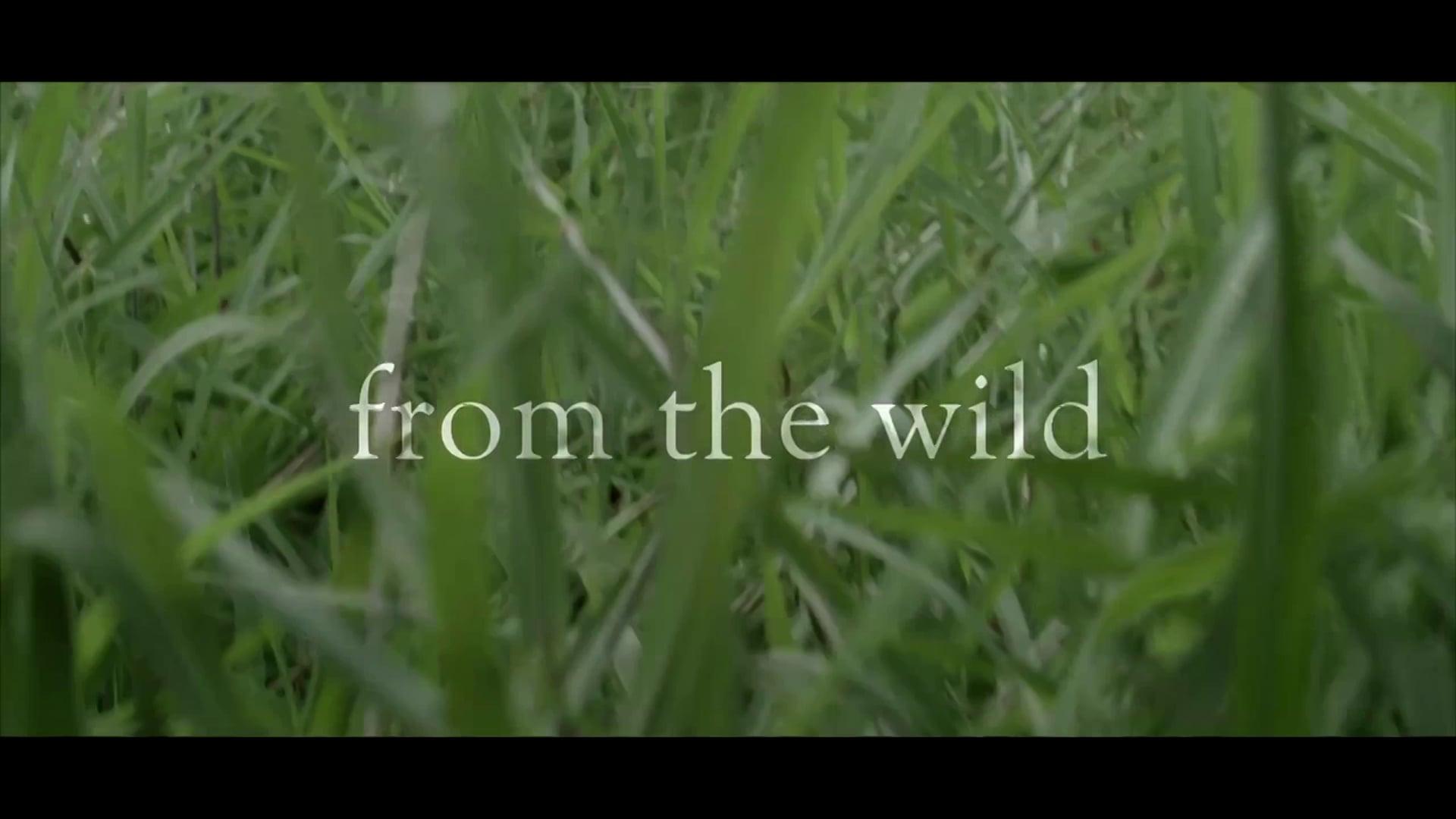 DARK RYE - From The Wild