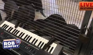 Otters Play the Keyboard and A Poodle on the Piano