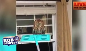 The Owl Wisperer