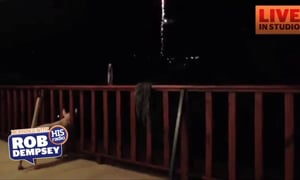 Music to Help Your Dog with the Fireworks