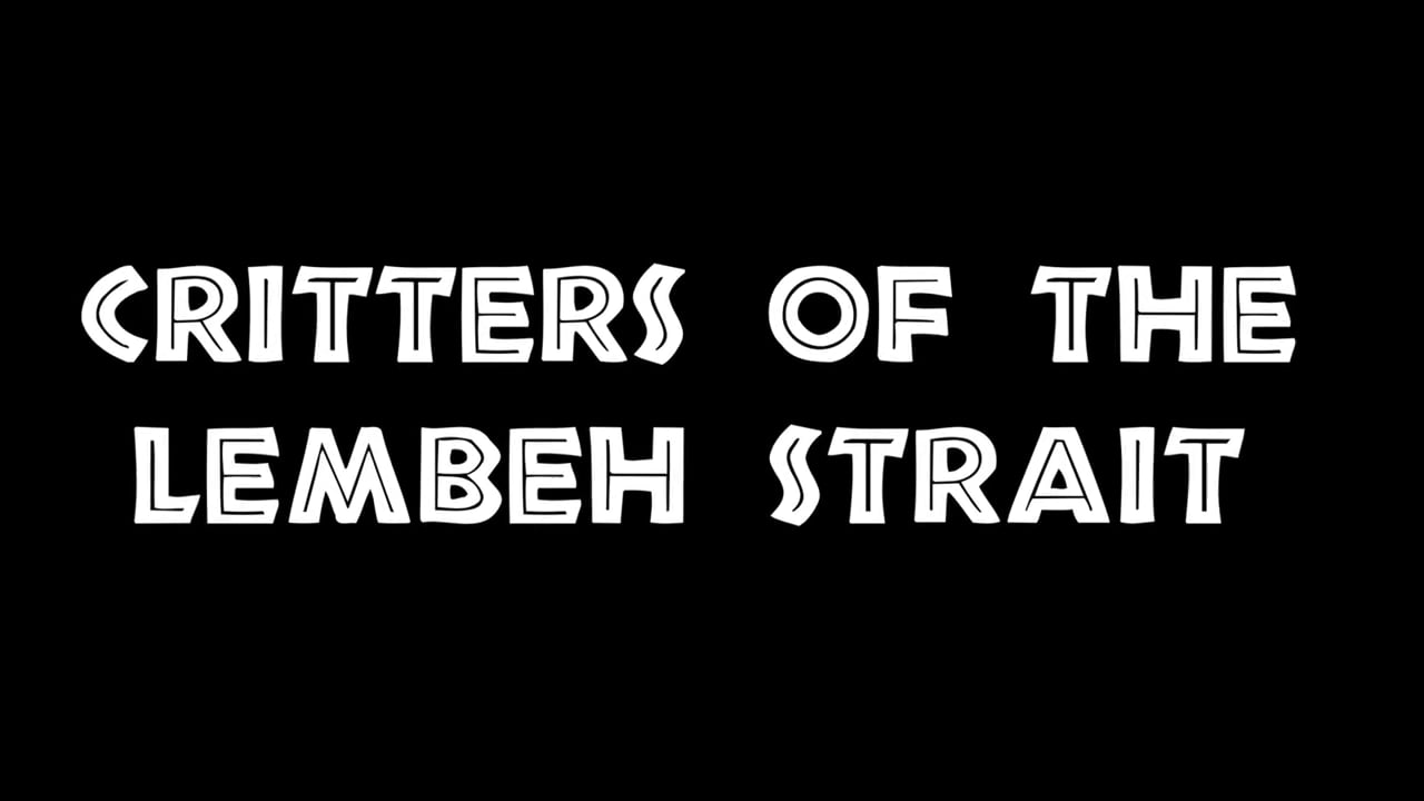 Critters of the Lembeh Strait - Best Of
