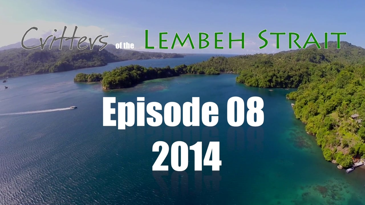 Critters of the Lembeh Strait   Episode 08/2014