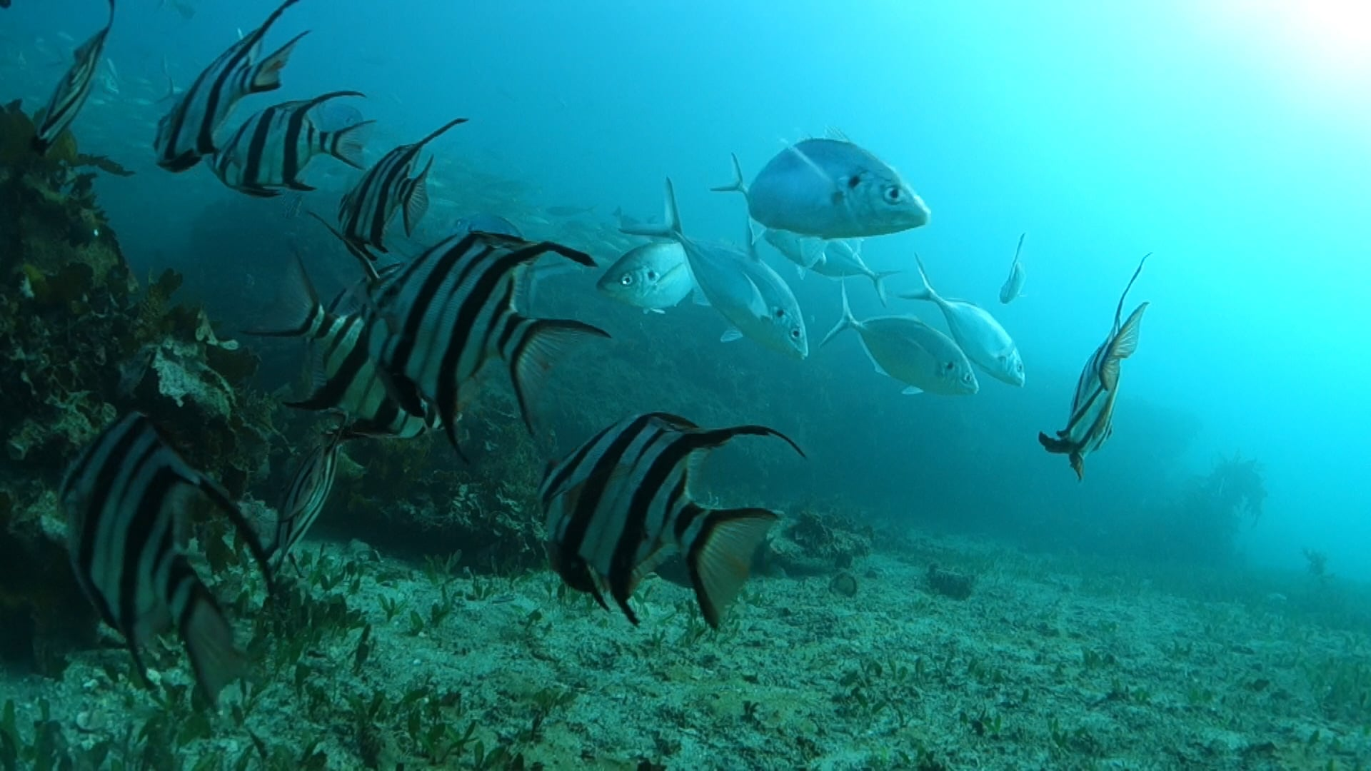 Tale of Three Bays - See why we need a real marine park in Sydney.