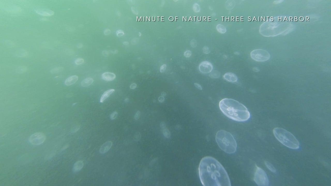 Minute of Nature - Three Saints Harbor