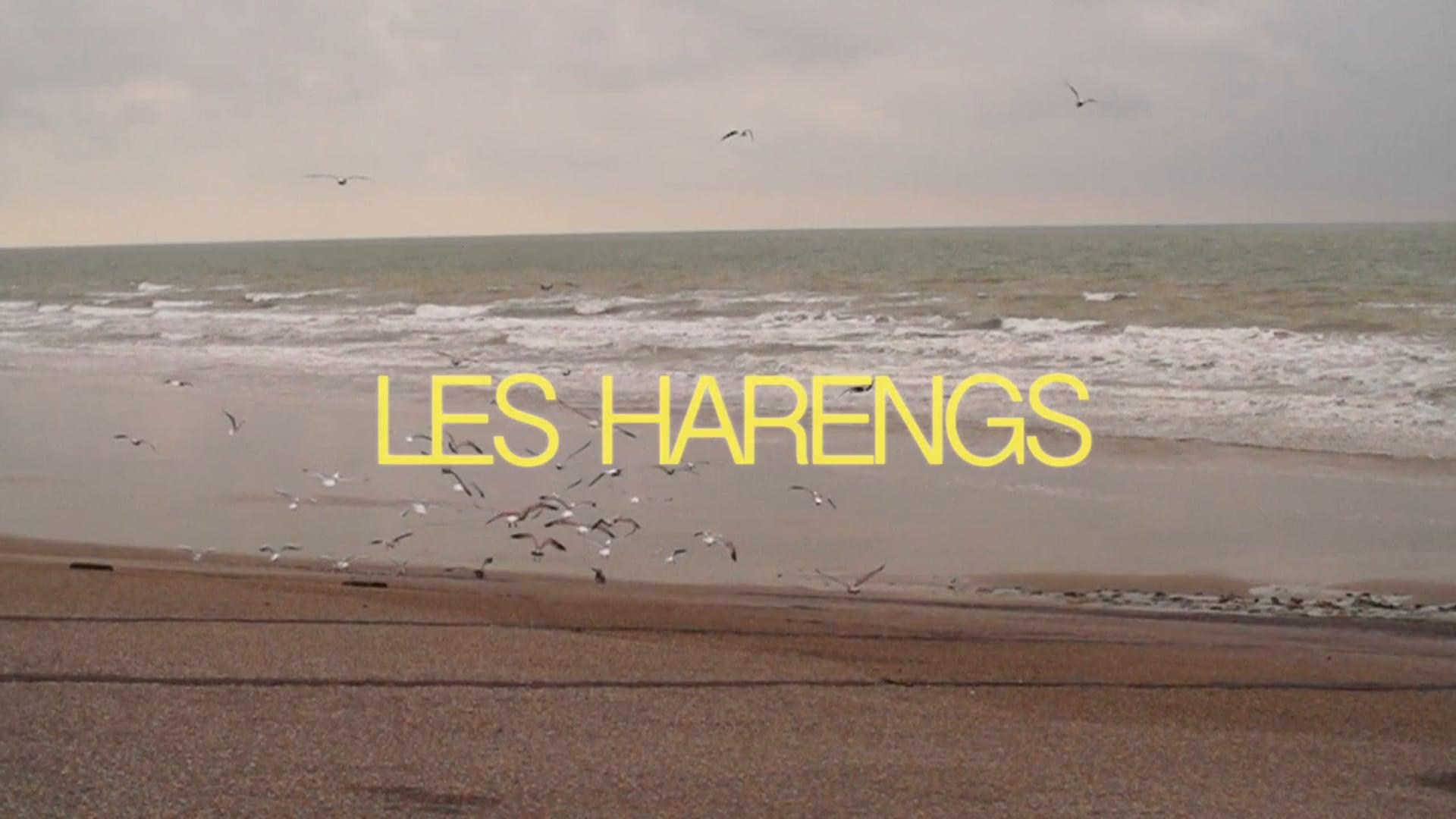"""Les Harengs"" teaser"