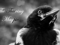 Die diebische Elster – The Thieving Magpie