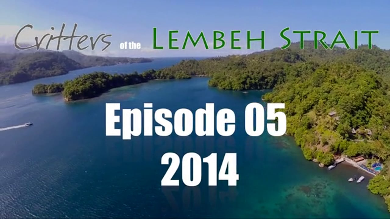 Critters of the Lembeh Strait   Episode 05/2014