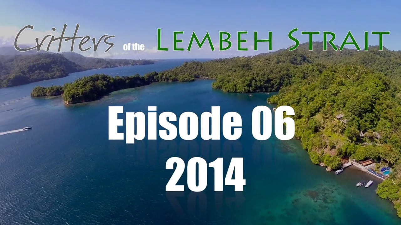 Critters of the Lembeh Strait   Episode 06/2014
